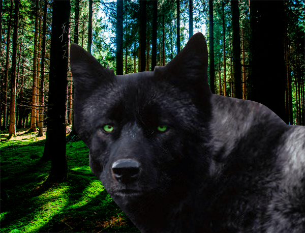 black wolf with green eyes - photo #13